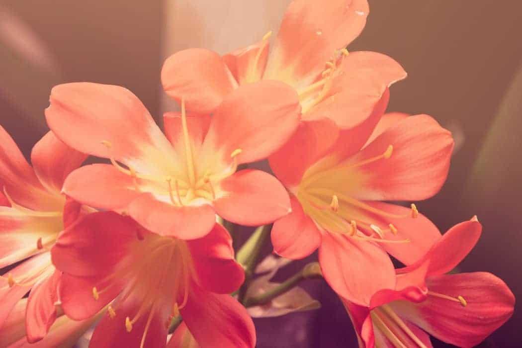 A beautiful image of some pretty flowers in a garden near Hayes Garden Machinery, North Devon